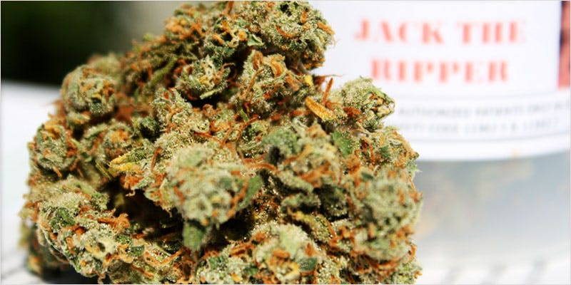 10 sativa ci 11 Worlds Most Famous Reggae Name Launches Own Weed Line