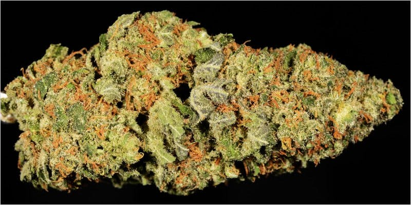 10 sativa ci 5 Worlds Most Famous Reggae Name Launches Own Weed Line