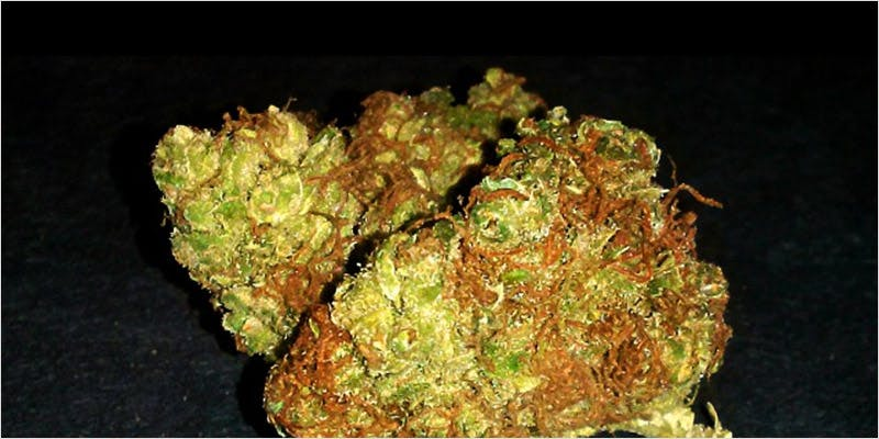 10 sativa ci 8 Worlds Most Famous Reggae Name Launches Own Weed Line