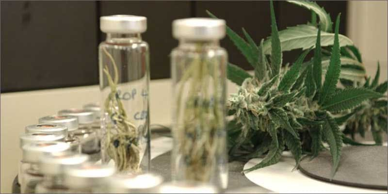 2 first funded mmj downunder vials Chevy Chase and Bill Murrays Marijuana Mission