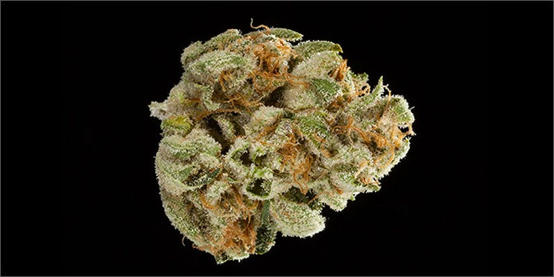 3 1 Check Out The Big Winners Of The SoCal Medical Cannabis Cup