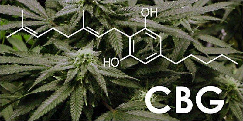 4 mental health cbg molecule Snoop Roasts Donald Trump