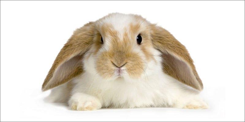 4 rabbits important cancerpatients rabbits Snoop Roasts Donald Trump