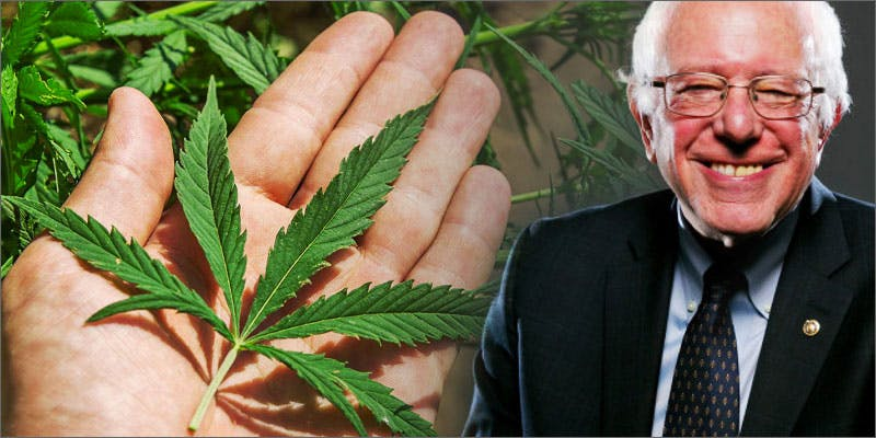 bernie weed leaf These People Cried When High And The Reasons Are Hilarious