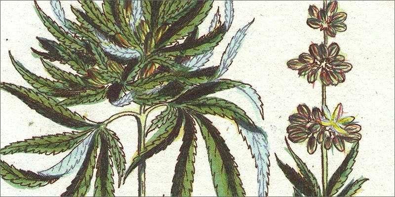 childbirth 10 Ancient Uses for Medicial Cannabis