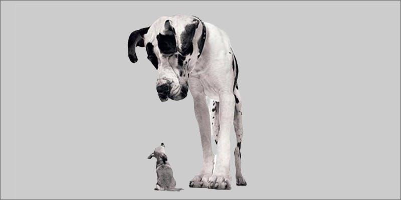 dogs Snoop Roasts Donald Trump