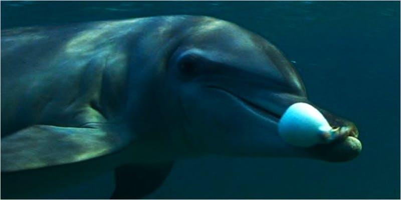 dolphin puff puff ci 1 Snoop Roasts Donald Trump