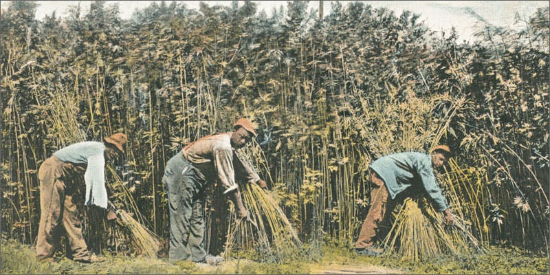 king hemp cutting These People Cried When High And The Reasons Are Hilarious