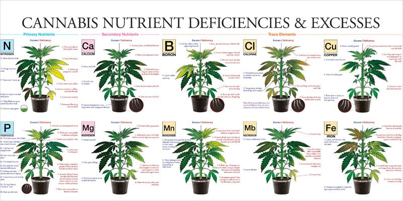 nutrients ultimate yield ci 1 Nutrients That Will Give Your Plants the Ultimate Yield