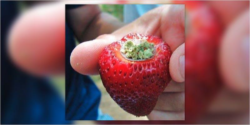 strawbery pipe ci 1 Snoop Roasts Donald Trump