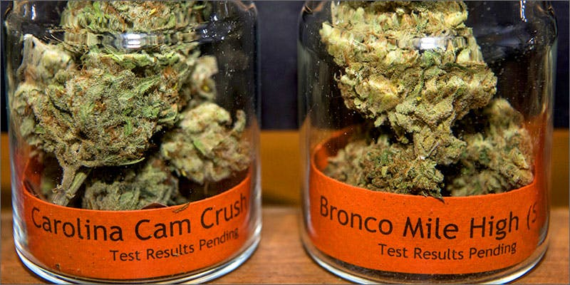 superbowl strains Worlds Most Famous Reggae Name Launches Own Weed Line