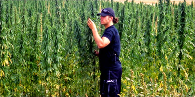 tending Chevy Chase and Bill Murrays Marijuana Mission