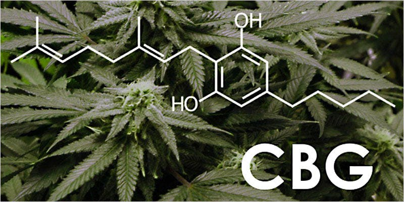 top 10 cannabanoids CI 4 Worlds Most Famous Reggae Name Launches Own Weed Line