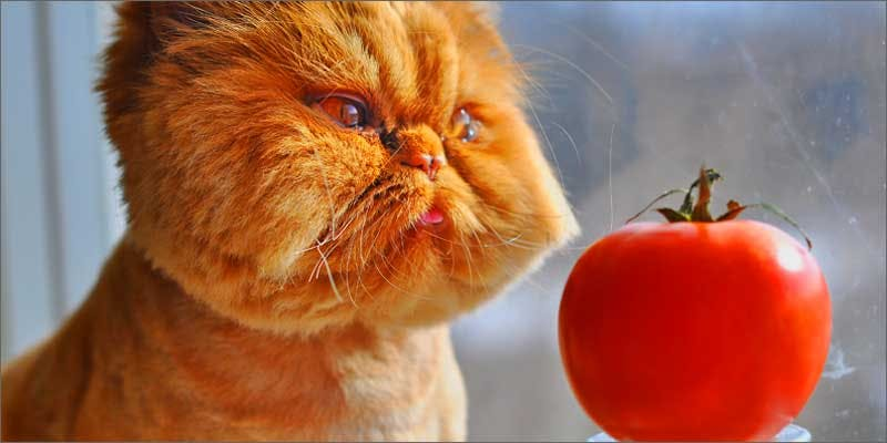 1 always high cat tomato These People Cried When High And The Reasons Are Hilarious