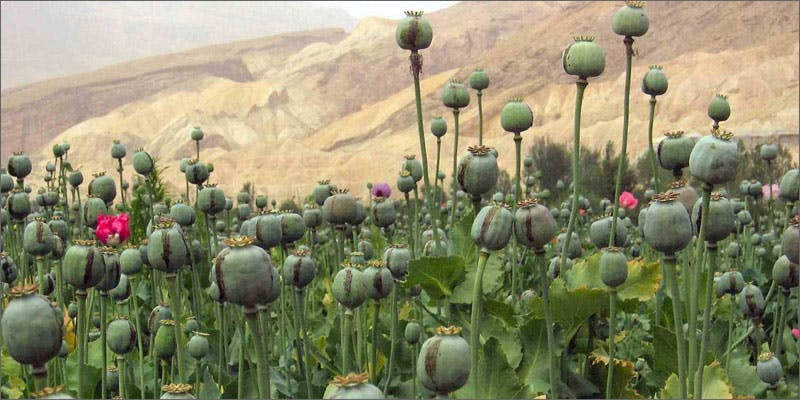 10 ancestors opium These People Cried When High And The Reasons Are Hilarious