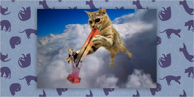 10 cats higher than you 7 Can You Master These 3 Awesome Smoke & Vape Tricks By 4/20?