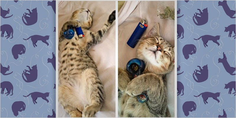 10 cats higher than you 8 Can You Master These 3 Awesome Smoke & Vape Tricks By 4/20?