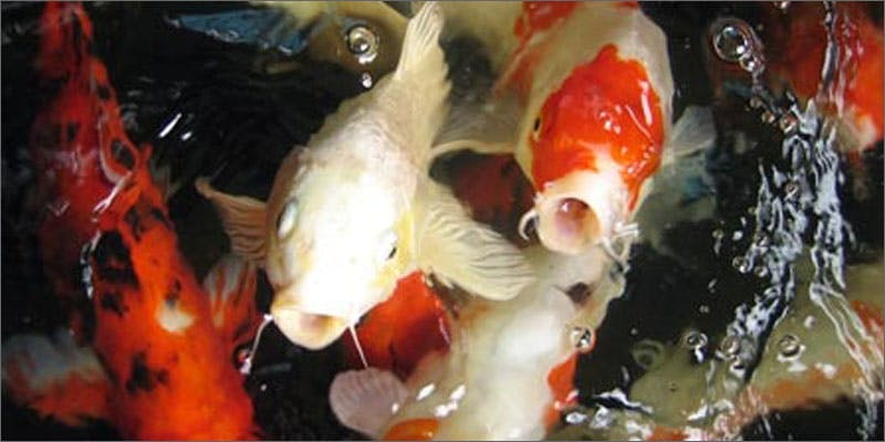 3 aquaponics fish These People Cried When High And The Reasons Are Hilarious