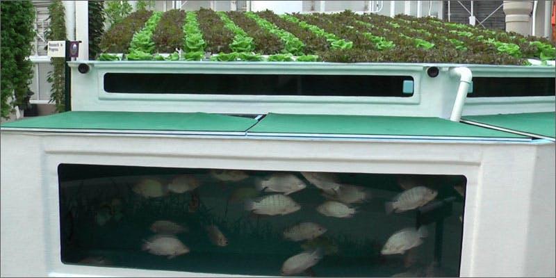 4 aquaponics setup You Need To See How Fish Help Grow Better Weed