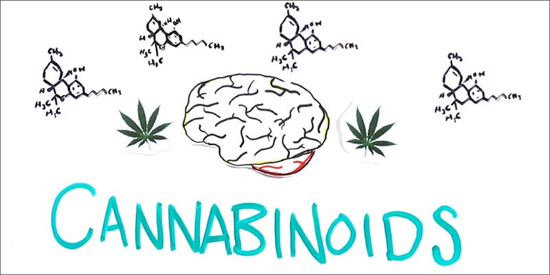 cannabinoids Can You Master These 3 Awesome Smoke & Vape Tricks By 4/20?