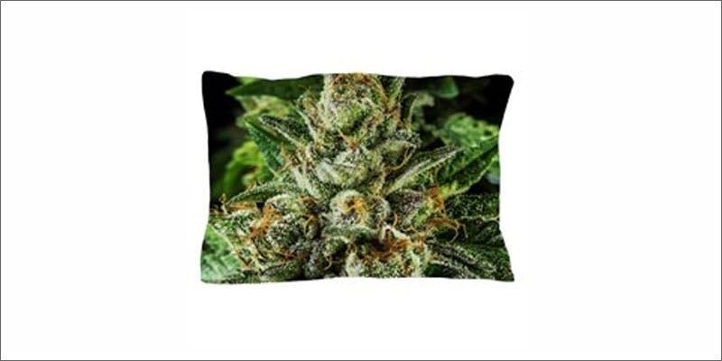 cannabis pillows 3 Marijuana And Pregnancy #2: Does Marijuana Have An Impact On Fertility?
