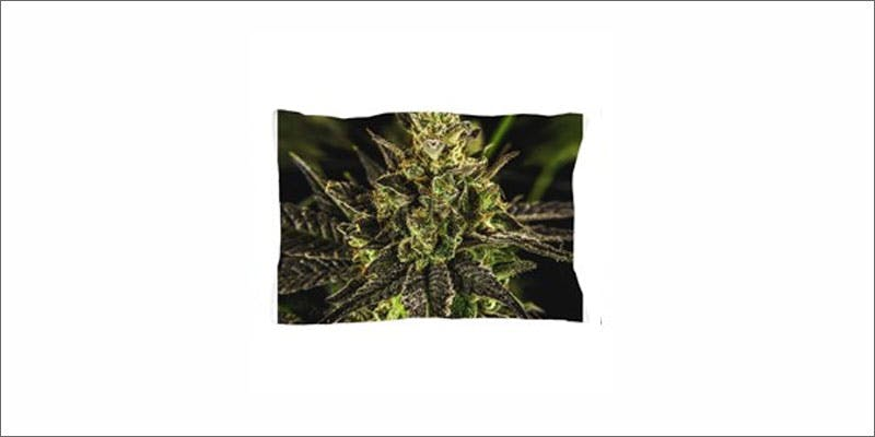 cannabis pillows 7 Restalk: Recycling Cannabis Waste Into Tree Free Paper Products