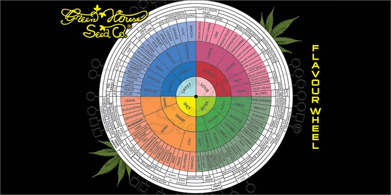 flavour wheel Why Does Cannabis Have Those Delicious & Distinct Aromas?