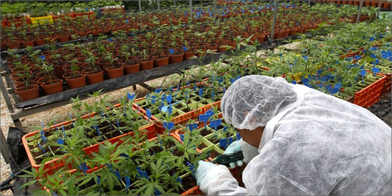 imm4 Israel: World Leaders Of Medical Marijuana