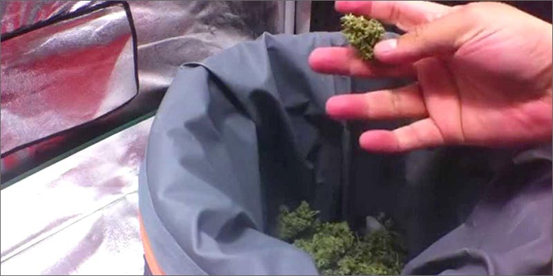 isoltating trichomes making hash2 Can You Master These 3 Awesome Smoke & Vape Tricks By 4/20?