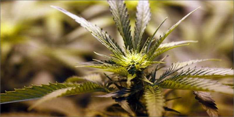 kentuky3 Marijuana And Pregnancy #2: Does Marijuana Have An Impact On Fertility?