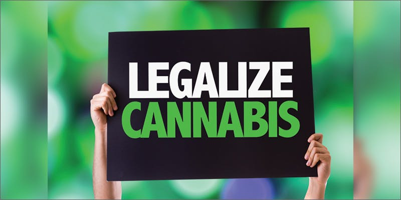 legalize Restalk: Recycling Cannabis Waste Into Tree Free Paper Products