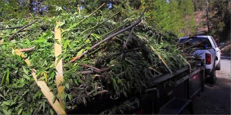 restalk waste Restalk: Recycling Cannabis Waste Into Tree Free Paper Products
