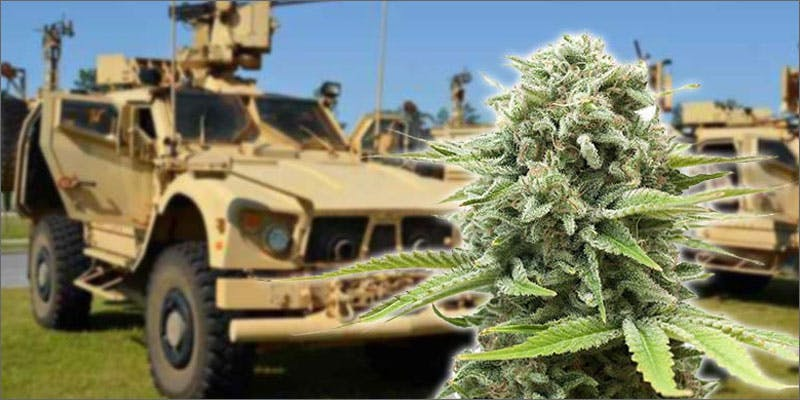 sheriff military truck plant Restalk: Recycling Cannabis Waste Into Tree Free Paper Products