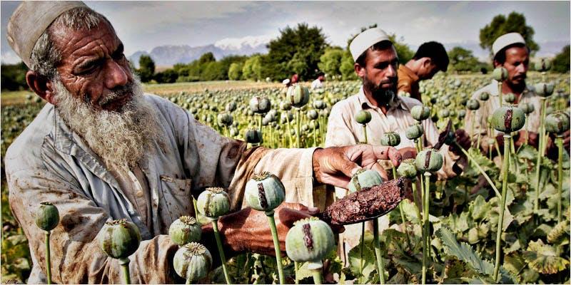 us gov ci 3 Will the U.S. Government Push for International Drug Decriminalization?