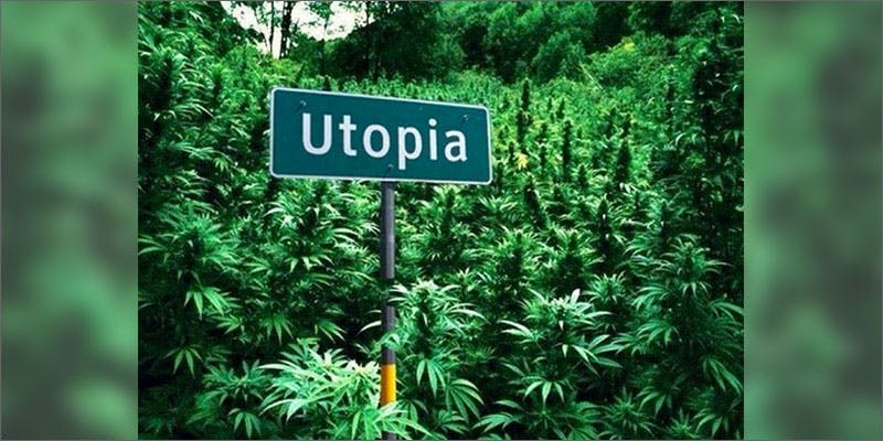 utopia Restalk: Recycling Cannabis Waste Into Tree Free Paper Products