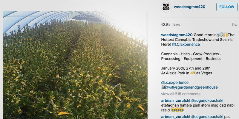 10 Weed Instagram Accounts 2 Heres 10 Epic Cannabis Moments Throughout History