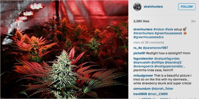 10 Weed Instagram Accounts 6 Heres 10 Epic Cannabis Moments Throughout History