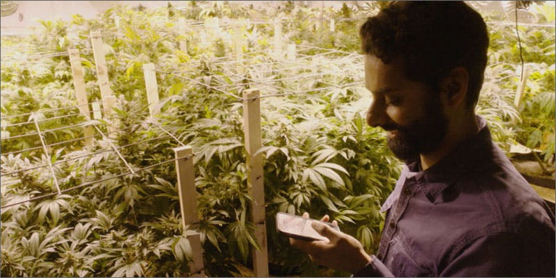 2 stoner stereotypes grow man on phone How Legalizing Cannabis In Europe Could Help Stamp Out Terrorism