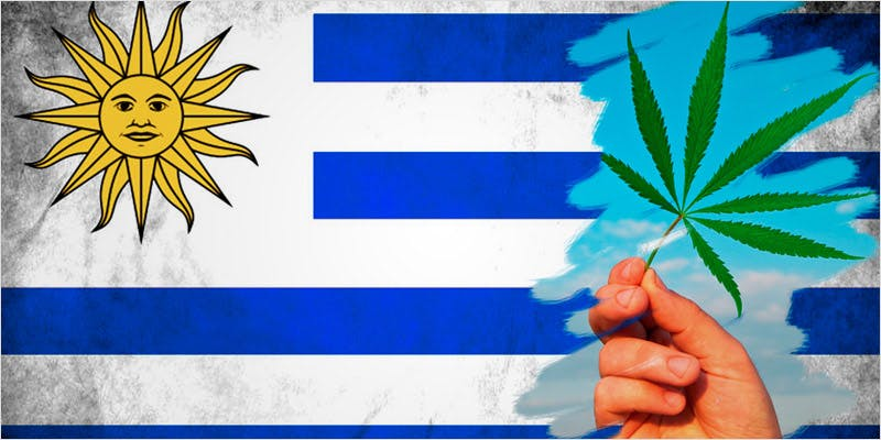 20 Crazy Facts 14 How Legalizing Cannabis In Europe Could Help Stamp Out Terrorism