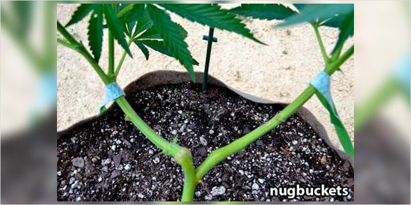 Clones 101 Caring for your clones 5 6 Year Old Cut From Basketball Team Because His Dad Smelled Like Weed
