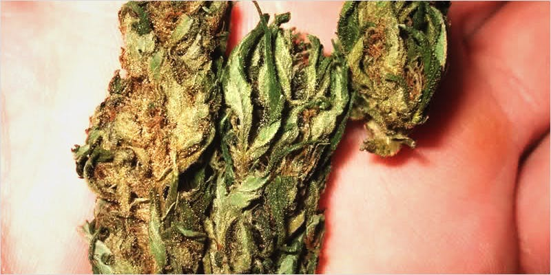 Eating Weed 1 6 Year Old Cut From Basketball Team Because His Dad Smelled Like Weed