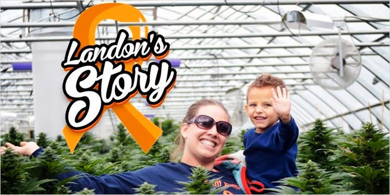 Oil Cures 3 Year Old 3 How Legalizing Cannabis In Europe Could Help Stamp Out Terrorism