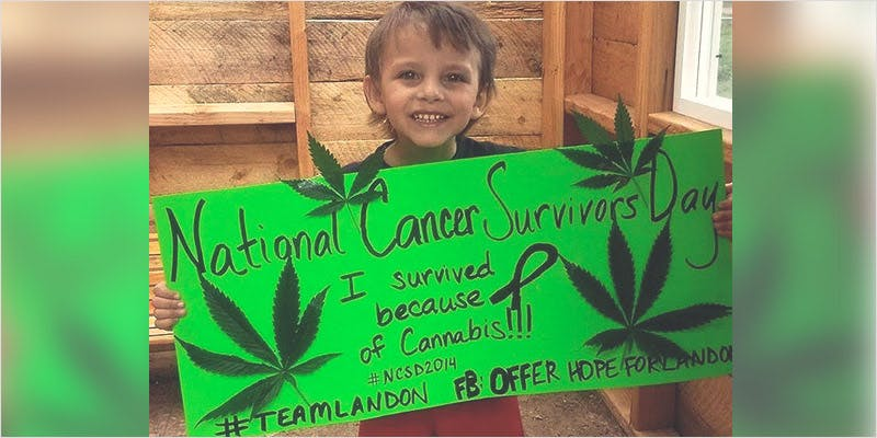 Oil Cures 3 Year Old 4 How Legalizing Cannabis In Europe Could Help Stamp Out Terrorism