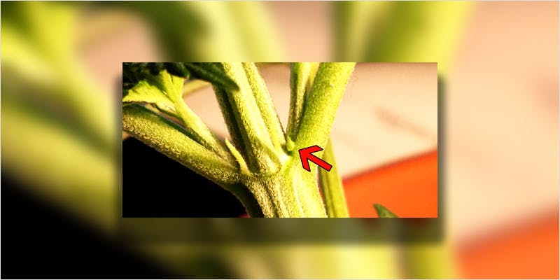Seeds 101 Sexing Your Sprouts 4 Heres 10 Epic Cannabis Moments Throughout History