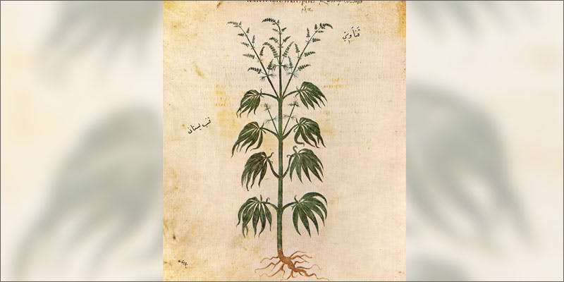 discovery of pot book illustration How Legalizing Cannabis In Europe Could Help Stamp Out Terrorism