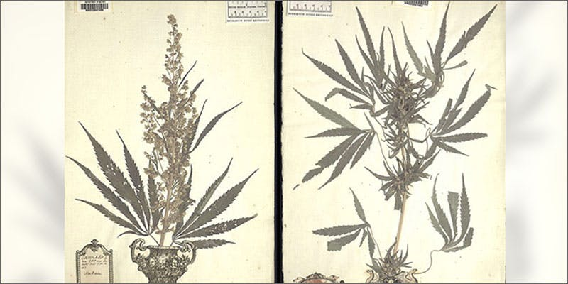 discovery of pot book How Legalizing Cannabis In Europe Could Help Stamp Out Terrorism