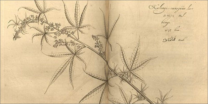 discovery of pot illustration How Legalizing Cannabis In Europe Could Help Stamp Out Terrorism