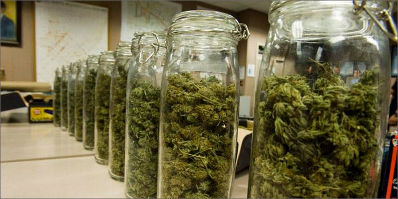 drying cannabis jars Heres 10 Epic Cannabis Moments Throughout History