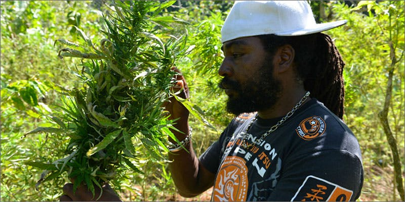 jl6 Is Jamaica Going to Legalize Cannabis & Become A Republic?