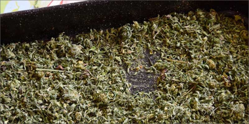 simply decarb cannabis in pan Heres 10 Epic Cannabis Moments Throughout History
